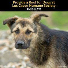 Build a Roof for an Animal Shelter in Mexico at The Animal Rescue Site. Please consider donating, $5 donation is the lowest level, if enough people donaed they would reach their goal and build  new roof.  Help the dogs...