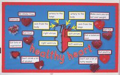 How do you keep your heart healthy - great display from Hands on Science