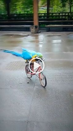 I Like To Ride A Bike Than Fly Parrot Cuteanimals Gif