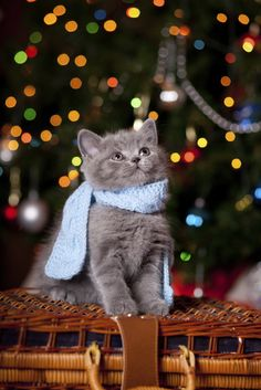 8 Holiday Gift Ideas for Cat Lovers Who Have Everything