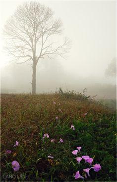 Misty morning over hilly Kokol Menggatal, Sabah, Malaysia by Lano Lan.