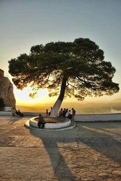 The tree of life, Constantine, Algeria