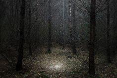 Des amas d'étoiles dans les sous-bois - La boite verte