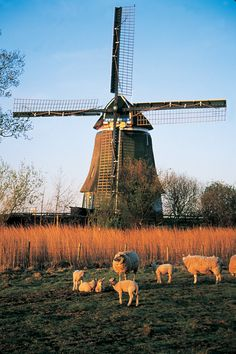 Windmill in Volendam (Photo: Holland.com)