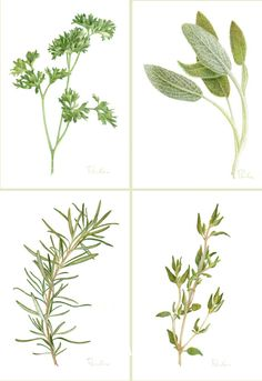 4 Herb Prints / Parsley Sage Rosemary Thyme / от PaulaPertileArt
