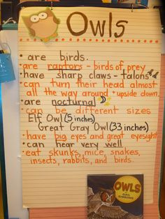 Literacy and Laughter - Celebrating Kindergarten children and the books they love: Owl Research - Fact Books