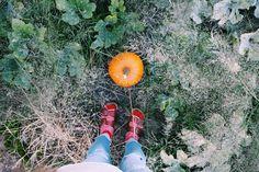 fall | pumpkins | photos | vsco | October | pumpkin patch
