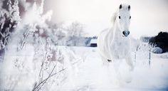 animal, animals, beautiful, christmas, cute