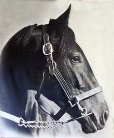 War Admiral ~ Winner of the Triple Crown in 1937 Thoroughbred Horse, Appaloosa Horses, Most Beautiful Horses, All The Pretty Horses, Horse Barns, Horse Stalls, Triple Crown Winners, Horse Saddles, Western Saddles