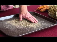 John Navazio explains how to save seeds from carrots. Produced as part of The Seed Garden Book. http://www.seedgardenbook.com