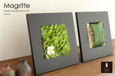 Rakuten arrangement> Interior Green> Magritte: Preserved Flower Fine - on the wall or on the table - italian ruscus, Adiantum, Moss, Lamb's-ear, Hart leaf or Miscanthus