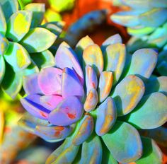 Succulent Color - Botanical Art by Sharon Cummings.Buy Abstract Prints by Sharon Cummings, Fine Artist. From Original Paintings and Designs. Buy Art O. Cactus Art, Buy Art Online, Abstract Wall Art, Botanical Art, American Art, Fine Art America, Original Paintings, Art Prints, Artwork