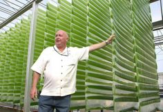 Algae Fuel Solutions for the Energy Crisis Biomass Energy, Renewable Energy, Solar Energy, Solar Power, Energy Crisis, Backyard Aquaponics, Aquaponics System, Vertical Farming, Green Technology