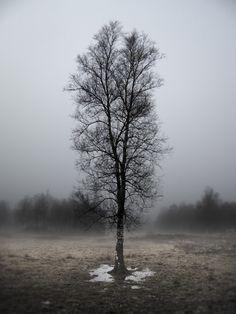 #tree #landscape #lone