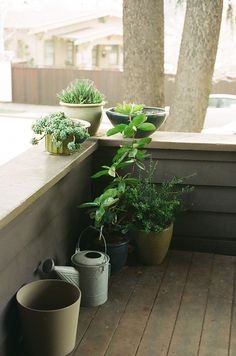 looks like container gardening, just right for a city apartment!