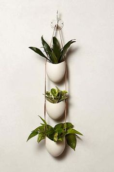 Leather-Latched Wall Planter For An Indoor Hanging Wall - Such A Simple Way To Bring Life In to A Room