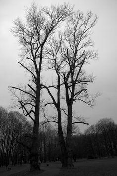 November shades of grey