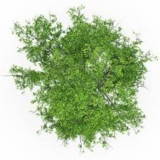 tree texture plan