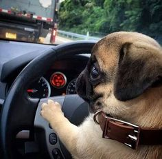 I will turn this car around mister
