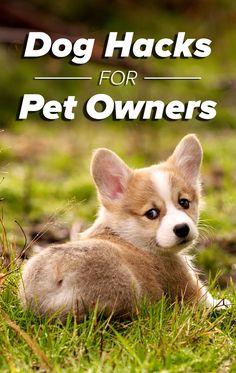 Header_logo.v2.us SEARCH   Mobile_logo Share  Tweet  16 simple pet hacks every dog owner should know