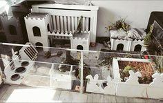 Kaninchenhaltung in der Wohnung Eine Kaninchen-Haltung in der Wohnung setzt generell die Bereitschaft voraus, Kompromisse einzugehen. Wer ...