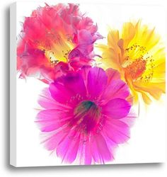 Picture of Three Echinopsis. #kidsdecor #preteen #pretty #wallart #renovate #girly #flowers #littlegirlroom #pinkroom