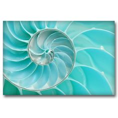 Canvas print SEA SHELL by Sticky!!!