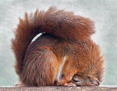 Yoga: downward squirrel.  Namaste.