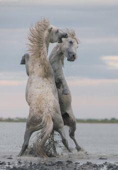 Битва(battle) By Daniel Korzhonov http://kordan.35photo.ru/photo_777015/