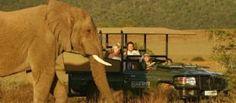 Shamwari Game Reserve - Shamwari, Eastern Cape
