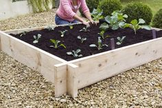 Discover how to build a simple raised bed for growing tasty vegetables in just three steps, in our practical project, from BBC Gardeners' World Magazine.