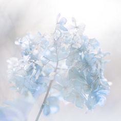 Pastel blue uploaded by 𝓈𝒶𝓂𝒶𝓃𝓉𝒽𝒶 𝓈𝑒𝓇𝑒𝓃𝒶 ✰ on We Heart It Blue Aesthetic Pastel, Flower Aesthetic, White Aesthetic, Colorfull Wallpaper, Inka Williams, Fleur Delacour, Bleu Pastel, Everything Is Blue, All Nature