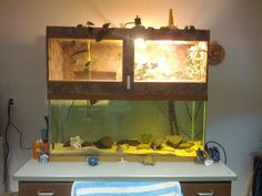 Turtle Tank (anyone keep them?) - Page 2 - The Planted Tank Forum Pet Turtle, Baby Turtles, Turtle Supplies, Turtle Dock, Franklin The Turtle, Reptile Decor, Turtle Aquarium, Fish Tank Stand, Turtle Homes