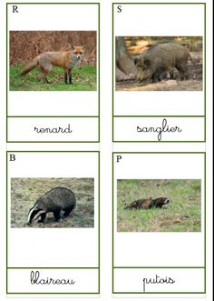 nomenclature map the animals of the forest - animals Web Animal, Forest Animals, Language Arts, Animation, Map, Recherche Google, French, Nature, Inspiration