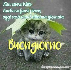 gattino tenero morbido dolce Public Witnessing, Italian Memes, New Years Eve Party, Animals And Pets, Good Morning, Humor, Cornice, Videos, Instagram