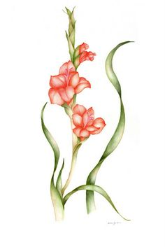 gladiolus - watercolor note cards - original - pkg of 5 - 5 x 7 -