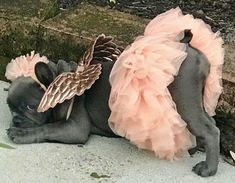 Blue French Bulldog Angel in a Pink TuTu with Wings ❤️