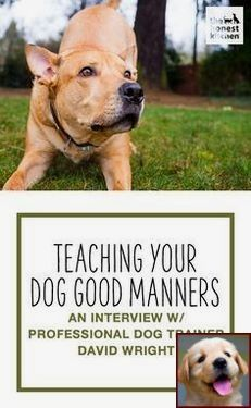 1 Have Dog Behavior Problems Learn About House Training A Puppy At Night And Sniffer Dog Training Courses Uk Dog Training Training Your Dog Training Your Puppy