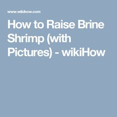 How to Raise Brine Shrimp. Brine shrimp are a nutritious and easy to raise feed for tropical and marine life. Although there are plenty of artificial dietary options, brine shrimp provide important lipids, vitamins, and amino acids many.