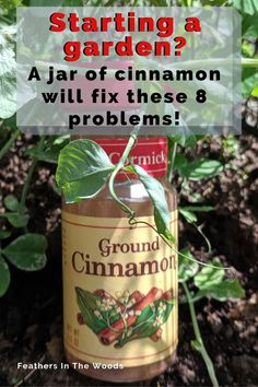 Use cinnamon in your garden! 8 different uses for cinnamon in the garden. From fungus gnats to rooting hormone, cinnamon has a host of uses for both houseplants and gardens. Plus, it's organic! Here's how to use it effectively. Garden Yard Ideas, Lawn And Garden, Garden Crafts, Garden Layouts, Garden Fun, Garden Decorations, Ants In Garden, Porch Garden, Garden Water