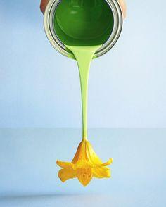 Green Paint + Daylily
