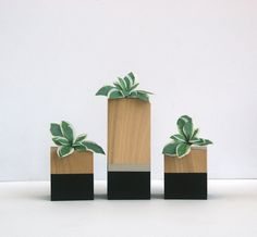 Black and Silver Air Plant Set Air Plant Holder by FurAndThicket