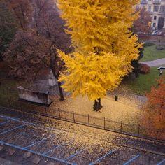 Autumn, Turin, Italy