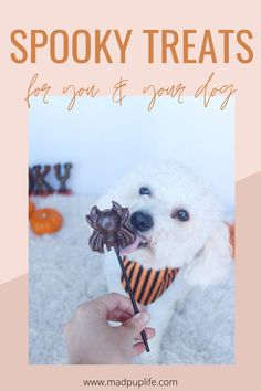Treat yo'self ( Puppy Treats, Diy Dog Treats, Wild Animals Pictures, Animal Pictures, Animals Beautiful, Cute Animals, Spooky Treats, Pet Fox, Dog Mom