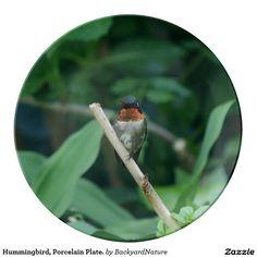 Hummingbird, Porcelain Plate. Porcelain Plates