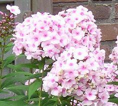 vaste planten lijst voor zonnige tuin