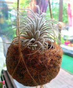 Ecuador, Coconut, Fruit, Plants, Plant, Planets