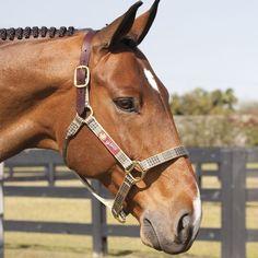 Baker Halter – Willow Equestrian - online tack store