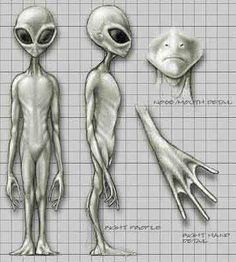greys Alien Tattoo, Aliens And Ufos, Ancient Aliens, Ufos Are Real, Alien Photos, Alien Drawings, Grey Alien, Alien Spaceship, Alien Concept Art