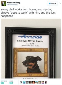 This dad who wanted to give his dog recognition. | 19 Dog Owners Who Are So Extra It'll Make You Smile
